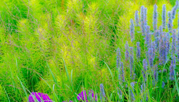July grass 2014  22
