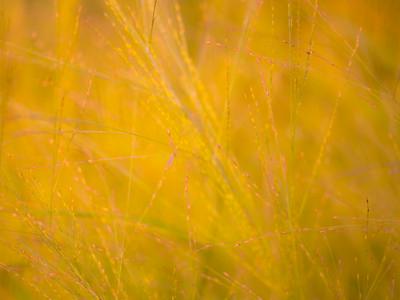 july grass 2014  11