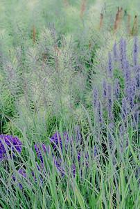 July grass 2014  23