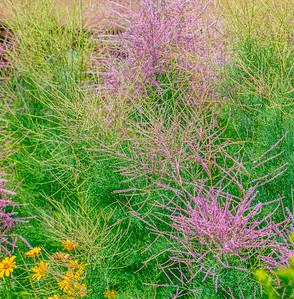 July grass 2014  19