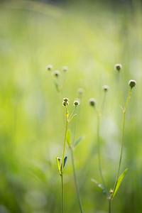 8-1-14 WET GRASS 47