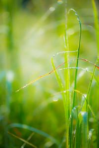 8-1-14 WET GRASS 38