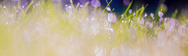 8-1-14 WET GRASS  1