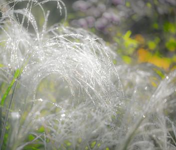 8-1-14 WET GRASS 24