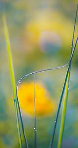 8-1-14 WET GRASS 44