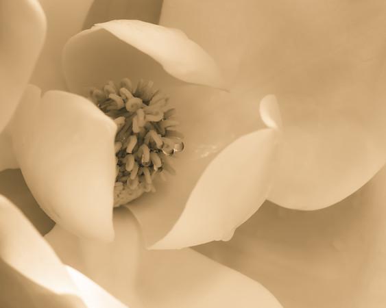 Magnolia Lobby