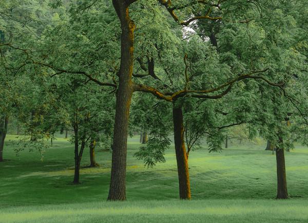 Tilles Park 19