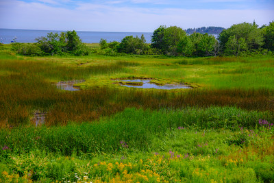 Maine Green 10