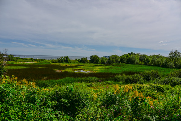 Maine Green 1