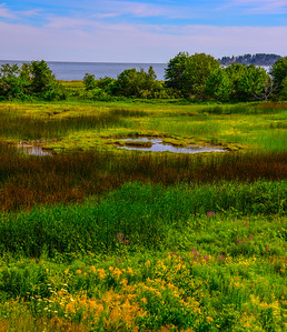 Maine Green 11