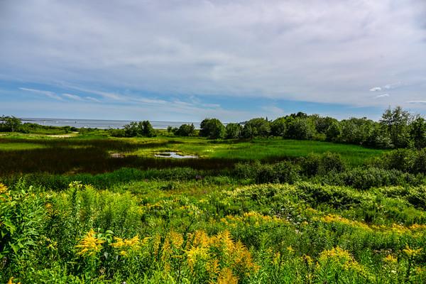 Maine Green 2