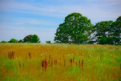 Maine Green 9