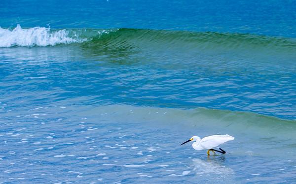 Gulf Beach 2014 43