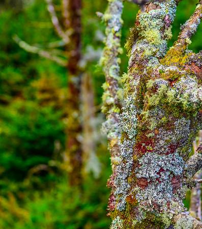 Smoky Mountains 135