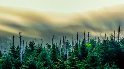 Smoky Mountains 81