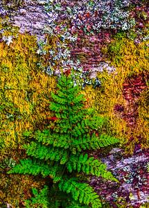 Smoky Mountains 143