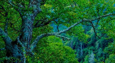 Smoky Mountains 39