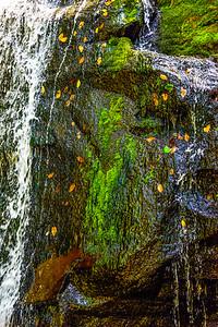Smoky Mountains 268