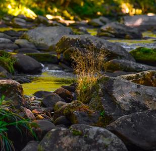 Smoky Mountains 231