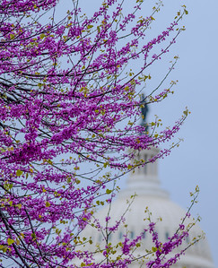 WASHINGTON DC 11