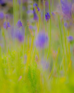 Soft Lavender FOUR SEASONS