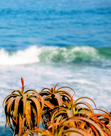 CITY OCEAN SOCAL LA JOLLA PACIFIC