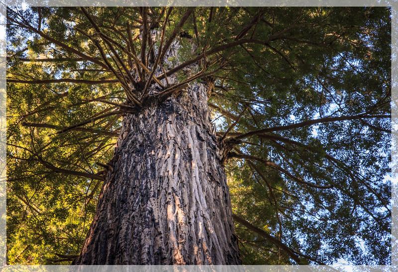 Many branches- Lady Bird-0503