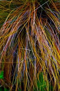 Bent Grass 2