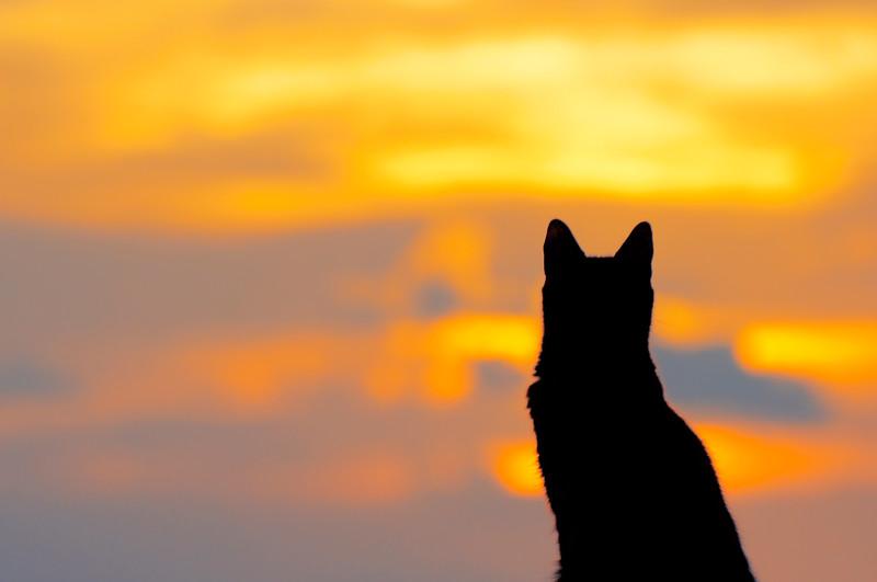 The sunset cat