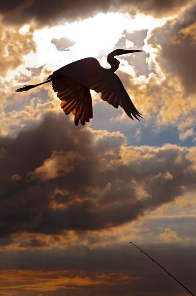 The heron's flight