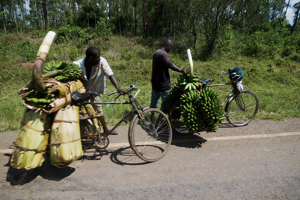 Moving Bananas in Uganda