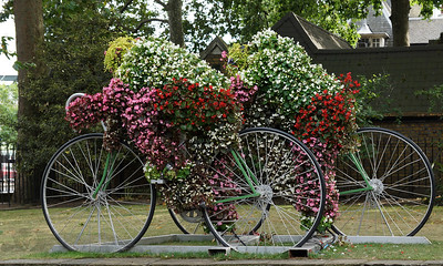 Flower Cyclists