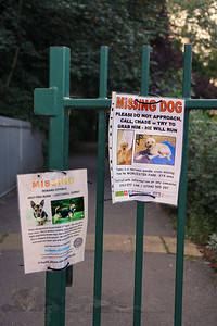 Missing Dog Posters