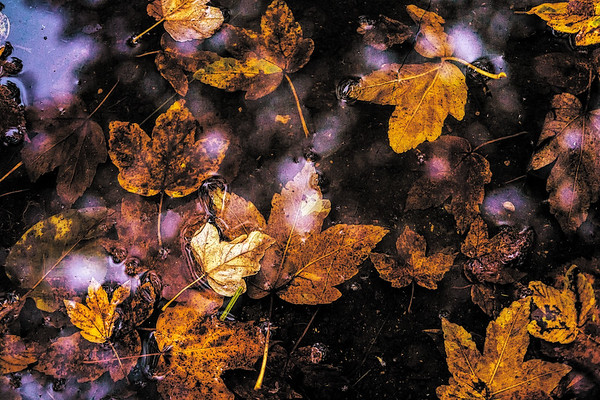Herbstfarben Germany 2016
