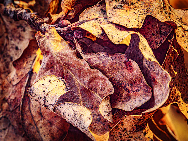 Crunched leaves