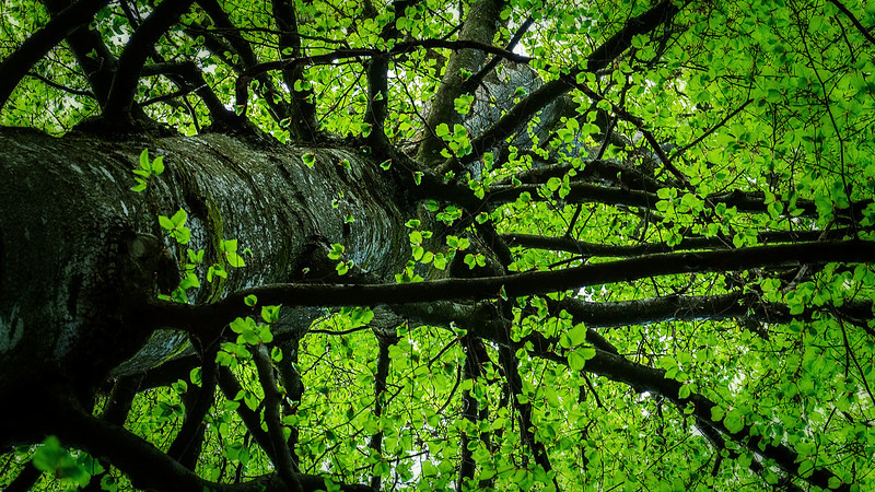 Natur umarmung