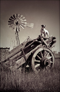 Raffles the Jack Russell, old cart and wind pump, near Queenstown, South Africa 1987-1991