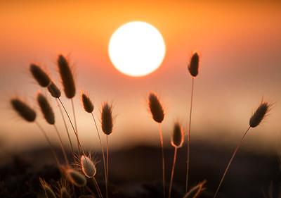 SUN_GRASS_01