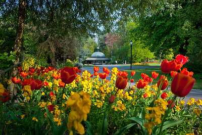 Spring flowers the Valley Gardens, Harrogate, North Yorkshire, United Kingdom