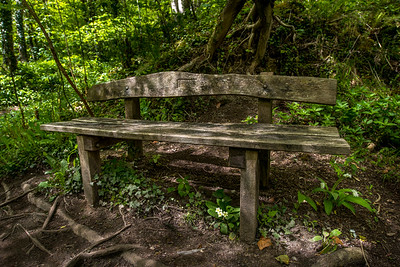 Bench, Hackfall, near Masham, North Yorkshire, United Kingdom