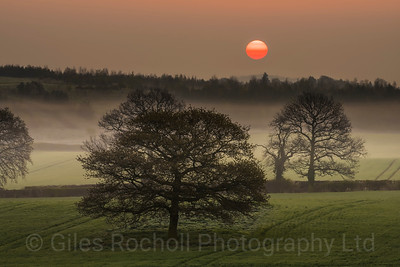 Sunrise: Woodall near Sheffield; Trees; sun; United Kingdom.