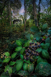 Black berries and folly, Hackfall, near Masham, North Yorkshire, United Kingdom