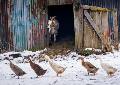 OTLEY_FARM_ANIMALS