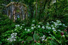 Folly, woods; art; beauty; explore; wild garlic; Giles Rocholl; Hackfall; landscape; love; Masham;  photography; print; prints; scenery; scenic; travel; United Kingdom; wild flowers; Wild Garlic; Yorkshire