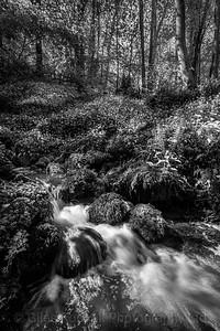 Spring stream, Hackfall, near Masham, North Yorkshire, United Kingdom