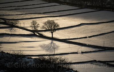 Sunshine breaks through heavy cloud to illuminate a tree Kettlewell, North Yorkshire, United Kingdom. 17.01.2018.