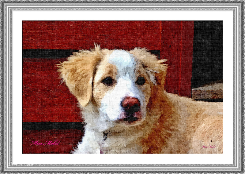 Adorable doggy portrait.Art Oil Painting Photo, digital download and wallpaper screensaver. DIY Print
