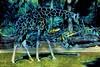4696-1PE   Safari Trot