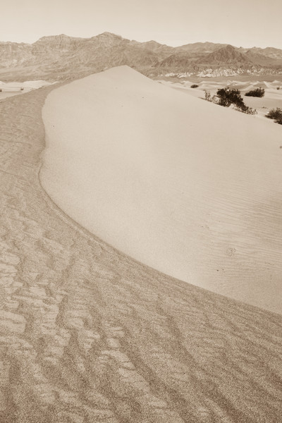 Death Valley Dune
