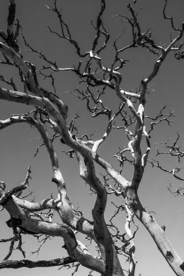 Tree at Mojave Desert National Preserve